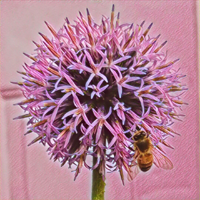 Pink thistle flower